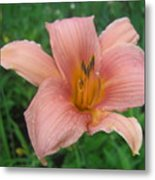 Pink Lily Metal Print