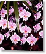 Pink Little Orchids Metal Print