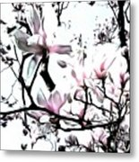 Pink Magnolia - In Black And White  Metal Print