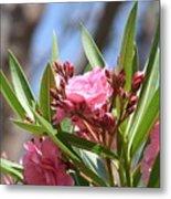 Pink Oleander IIi Metal Print
