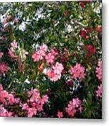 Pink Oleanders Metal Print