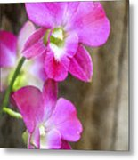 Pink Orchid Duo Metal Print