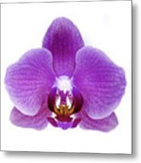 Pink Orchid On White Metal Print
