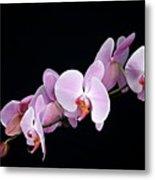 Pink Orchid Viii Metal Print
