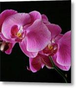 Pink Orchids Metal Print
