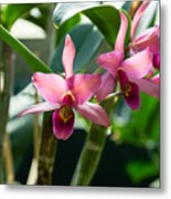 Pink Orchids - Exotic Tropical Glow Metal Print