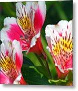 Pink Peruvian Lily 2 Metal Print