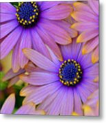 Pink Petals And Blue Buttons Metal Print