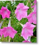 Pink Petunia Flower 9 Metal Print