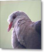 Pink Pigeon Nesoenas Mayeri Metal Print