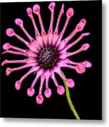 Pink Pinwheel Metal Print