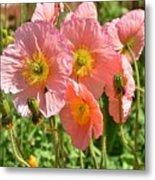 Pink Poppies 2 Metal Print