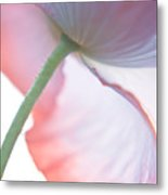 Pink Poppy 2 Metal Print