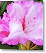 Pink Rhododendron Art Print Floral Canvas Rhodies Baslee Troutman Metal Print