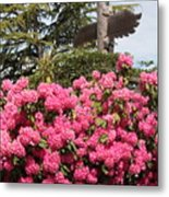 Pink Rhododendrons With Totem Pole Metal Print