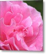 Pink Rose - 2 Metal Print