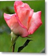 Pink Rose 3 Metal Print