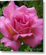 Pink Rose After Rain Metal Print