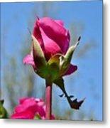 Pink Rose Against Blue Sky Iv Metal Print