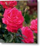 Pink Rose And Bud Metal Print
