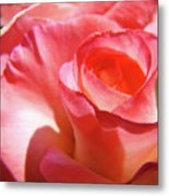 Pink Rose Art Prints Floral Summer Rose Flower Baslee Troutman Metal Print