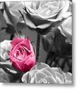 Pink Rose Metal Print by Blink Images