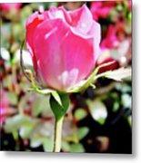 Pink - Rose Bud - Beauty Metal Print