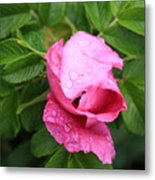 Pink Rose Bud Metal Print