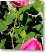 Pink Rose Buds Metal Print