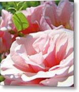 Pink Rose Flower Garden Art Prints Pastel Pink Roses Baslee Troutman Metal Print