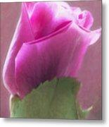 Pink Rose In Light Metal Print