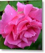 Pink Rose In Profile Metal Print