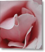 Pink Rose Kiss Metal Print