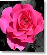 Perfect Pink Rose Metal Print