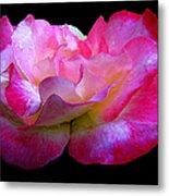 Pink Rose On Black 4 Metal Print