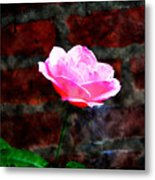 Pink Rose On Red Brick Wall Metal Print