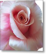 Pink Rose Painting Metal Print