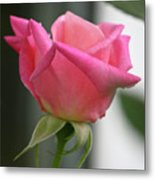 Pink Rose Squared Metal Print