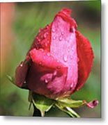 Pink Rosebud Metal Print