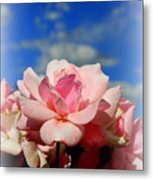 Pink Roses Against The Beautiful Arizona Sky Metal Print