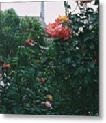 Pink Roses And The Eiffel Tower Metal Print