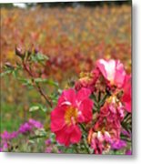 Pink Roses In Fall Metal Print