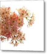 Pink Sakura Metal Print