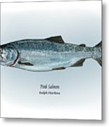 Pink Salmon Metal Print by Ralph Martens