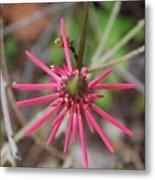 Pink Spikes Metal Print