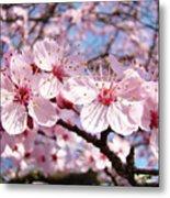 Pink Spring Blossoms Art Print Blue Sky Landscape Baslee Troutman Metal Print