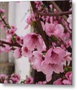 Pink Spring Metal Print