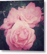 Pink Summer Roses Metal Print