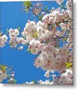 Pink Tree Blossoms Art Prints 55 Spring Flowers Blue Sky Landscape  Metal Print