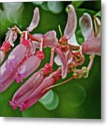 Pink Tropical Flower In Huntington Botanical Garden In San Marino-california Metal Print
